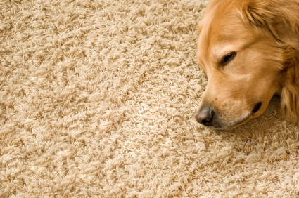 How to Get Coffee Stains Out of Carpet | Remove Stains