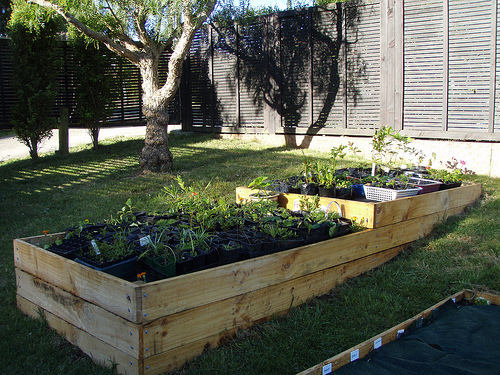 Raised garden beds DIY Raised Bed Garden: Grow Your Own!