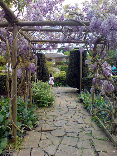 Easy Project Knowing Arbor Ideas For Wisteria