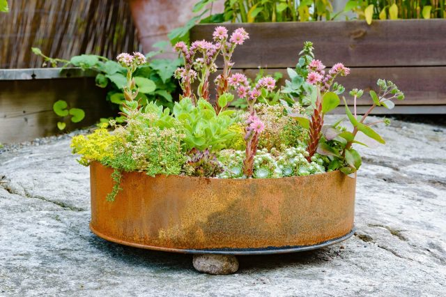 Upcycled Container Garden