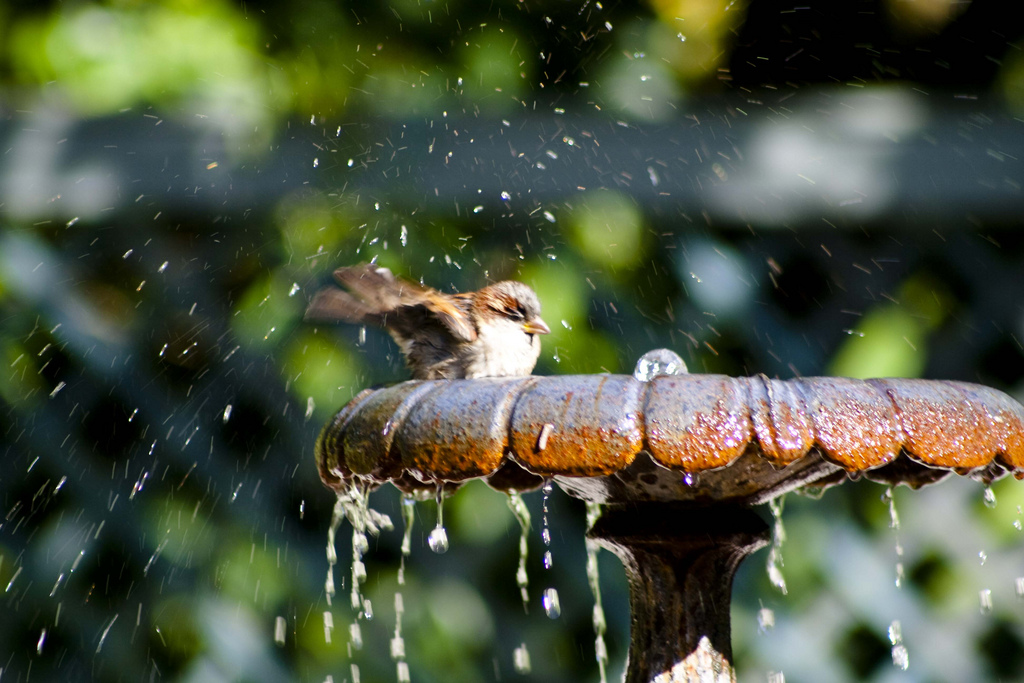 how to turn your backyard into a bird sanctuary