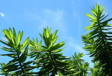 Energy efficient cooling in the summer moving air is cool for Cool low maintenance plants