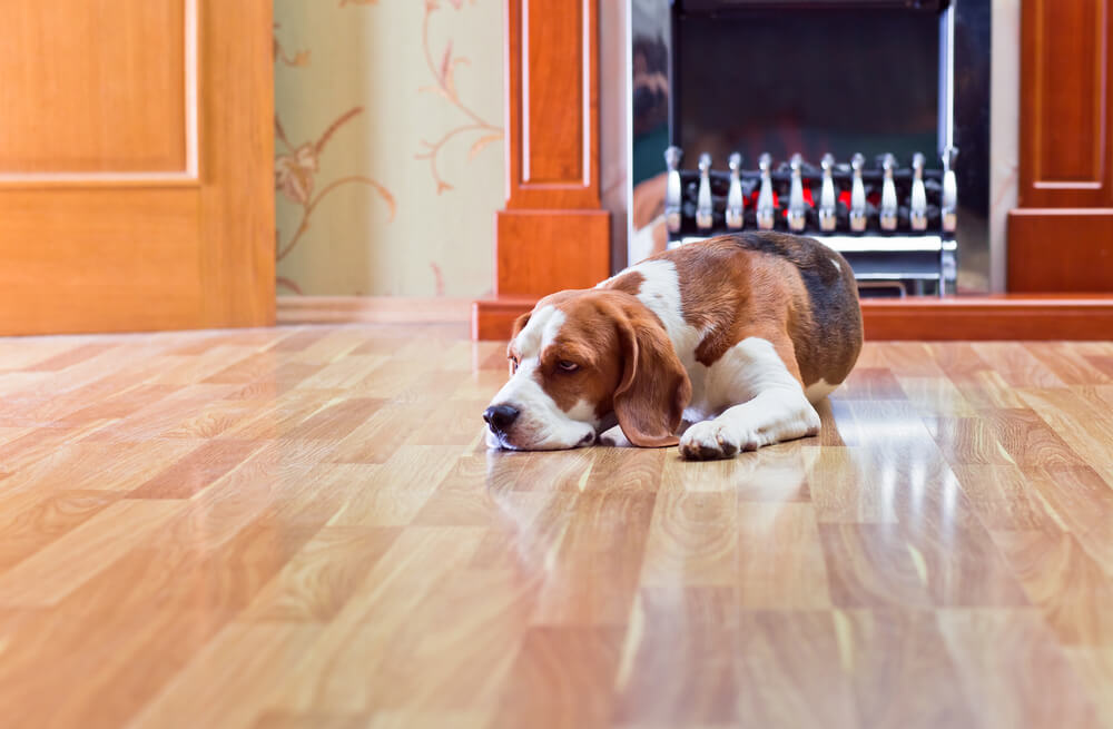 Hot Dog Planning For Pet Traffic On Floors And