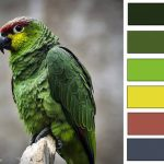 green parrot color spectrum