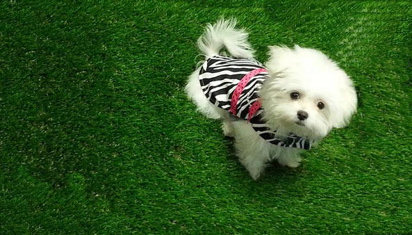 pet friendly artificial turf