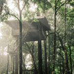 treehouse in misty woods