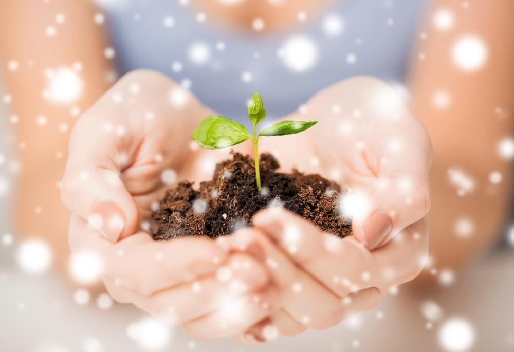Holiday season gifts gardening hands sprout