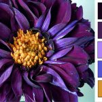 color palette royal thumb