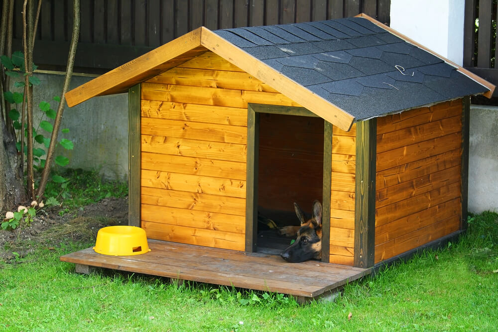 how to build a backyard shelter for pets for winter