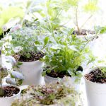 indoor herb garden window winter