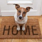 dog on a welcome mat