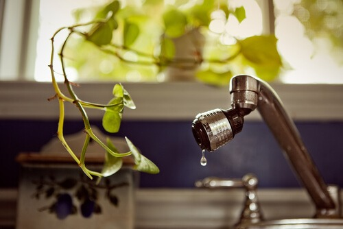 dripping tap with plant