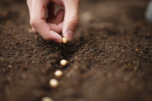 planting seeds soil