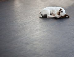 Energy Efficient Flooring