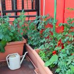 urban vegetable garden balcony