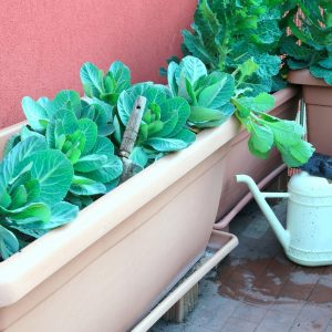 urban vegetable garden containers