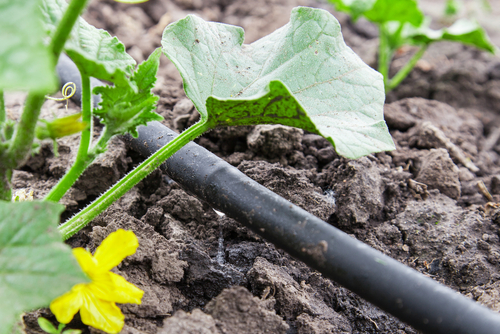 how to manage water drainage - drip irrigation