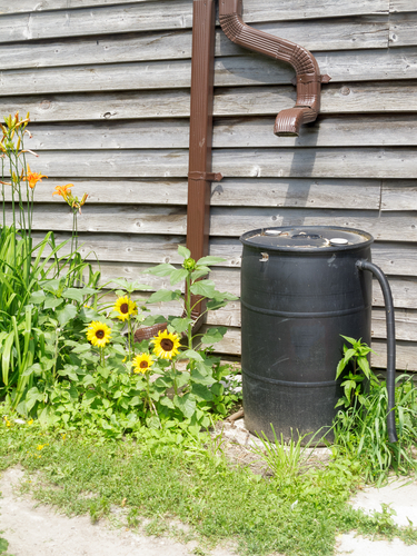 rainwater drainage and collection