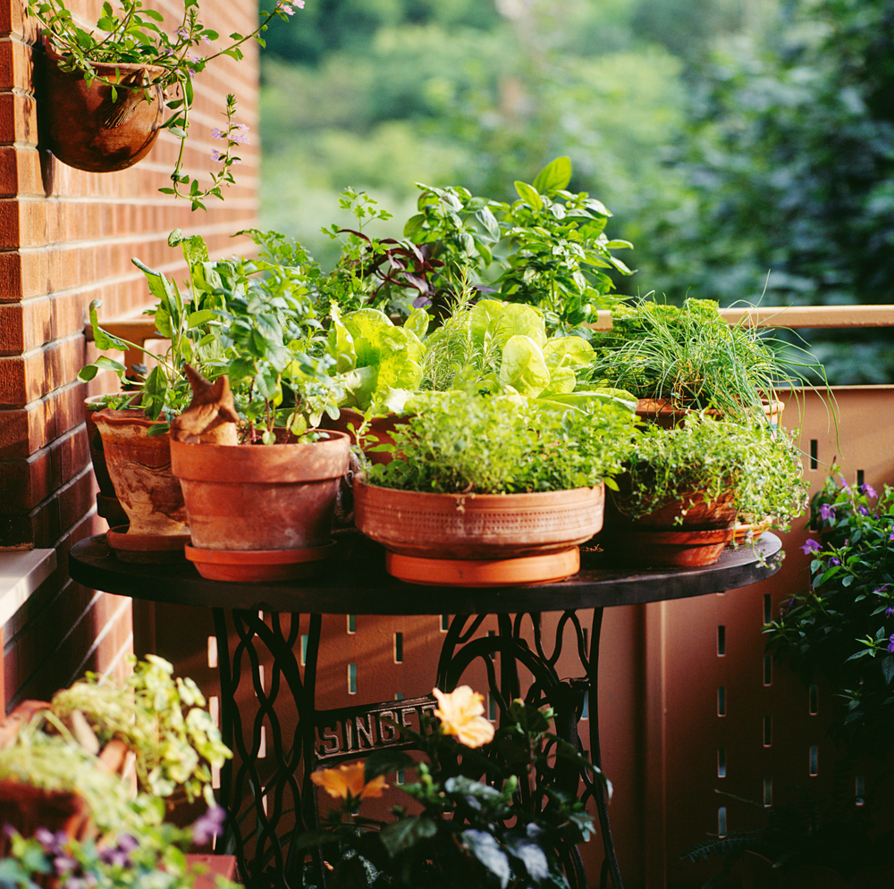 Urban Gardening - Potted plants