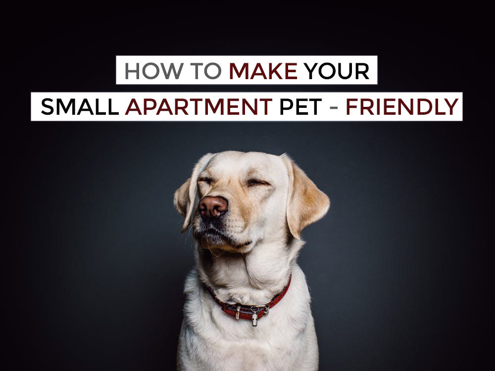 small_apartment_pet-friendly