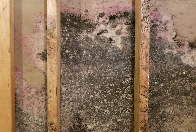 Getting Mold In Your Attic Is A Serious Issue Addition To Potentially Damaging The Structure Of Home Can Cause Health Hazards For