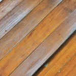 cupping wood floors