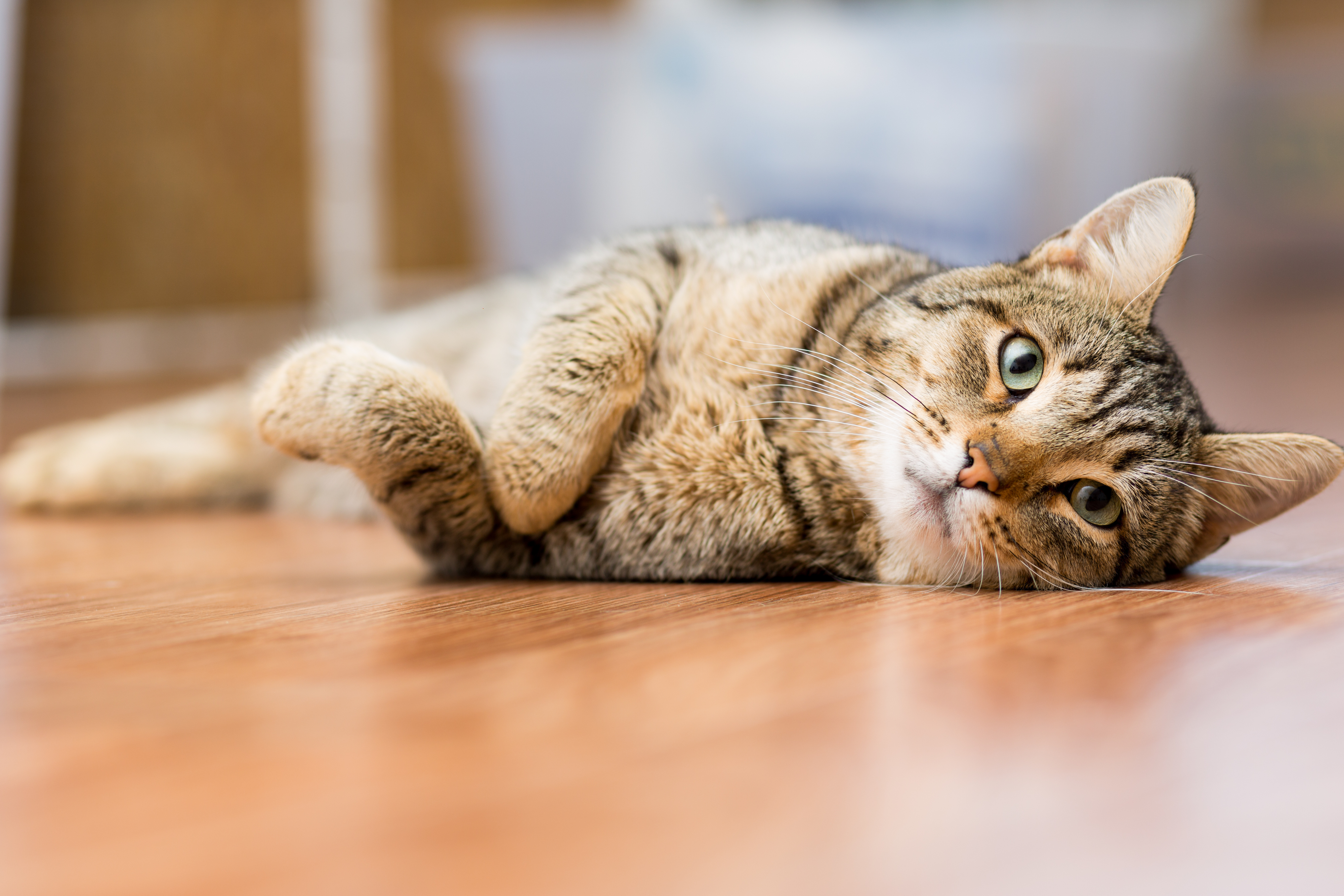 What Is The Best Type Of Flooring For Pets