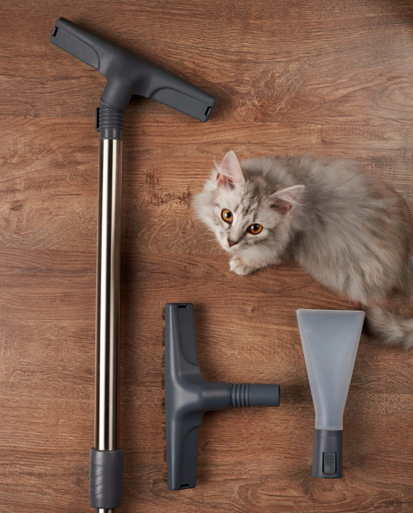 The Best Vacuums For Hardwood Floors And Petslearning Center