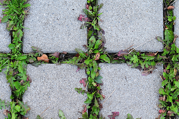 How To Stop Weeds From Growing Between Pavers Learning