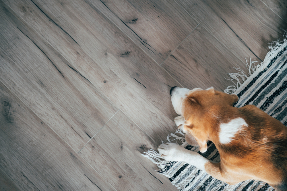 Vinyl Vs Laminate Flooring With Pets